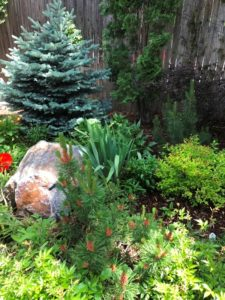 Local Gardens - Hoe and Hope Garden Club
